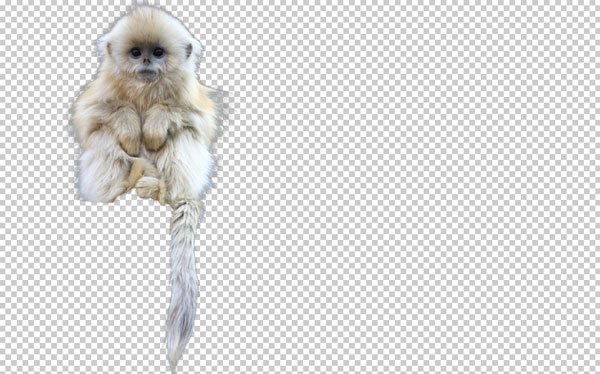 photoshop_create_selection_channel-2_8